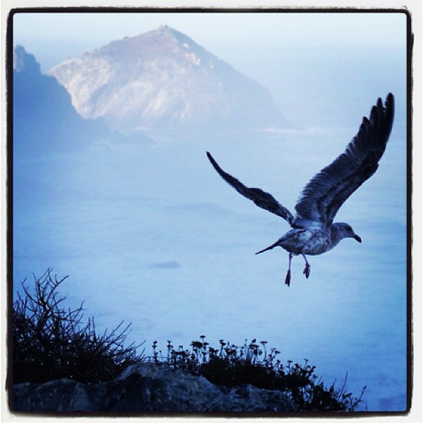 Big Sur early morn . ....