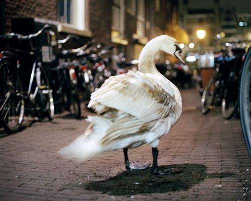 Nederland, Amsterdam, Taillights Fade, 2012Foto: Bart Koetsier