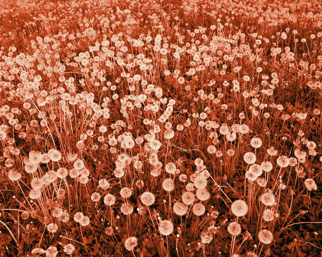 Her beautiful field of flowers burn magazine her beautiful field of flowers izmirmasajfo